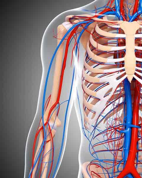 medicentro angiologia